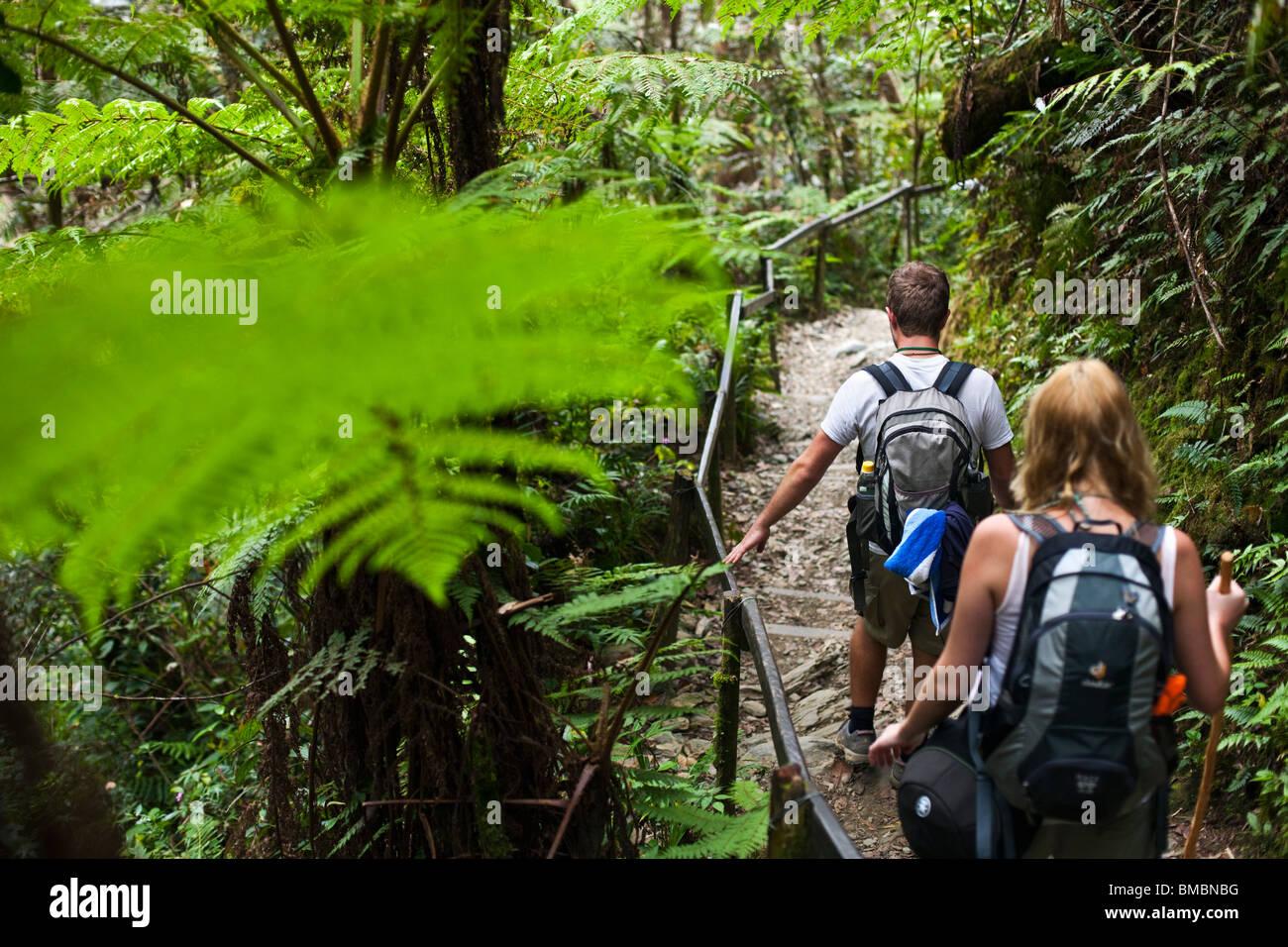 Couple hiking through tropical forest on the Mt Kinabalu summit trail. Kinabalu National Park, Sabah, Borneo, Malaysia - Stock Image
