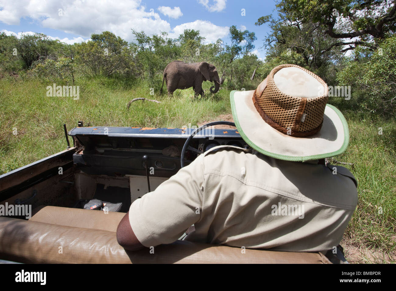 Game guide on safari, Mkhaya game reserve, Swaziland, Africa - Stock Image