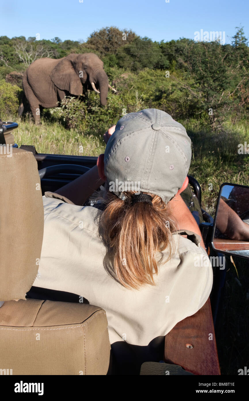 Safari guide viewing elephant, Makalali game reserve, South Africa - Stock Image