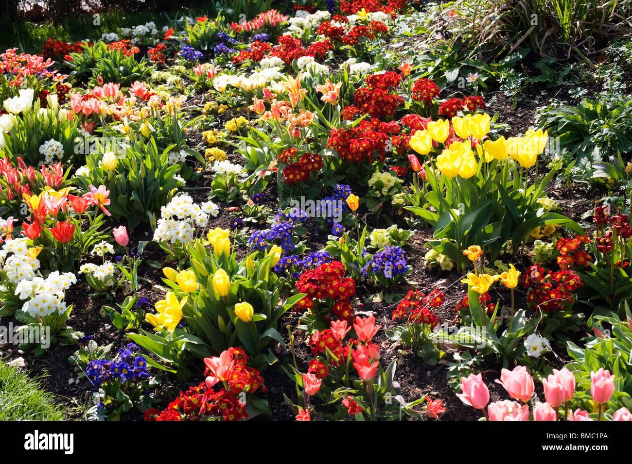 Spring Flowers Magnificent Display London England Uk Europe