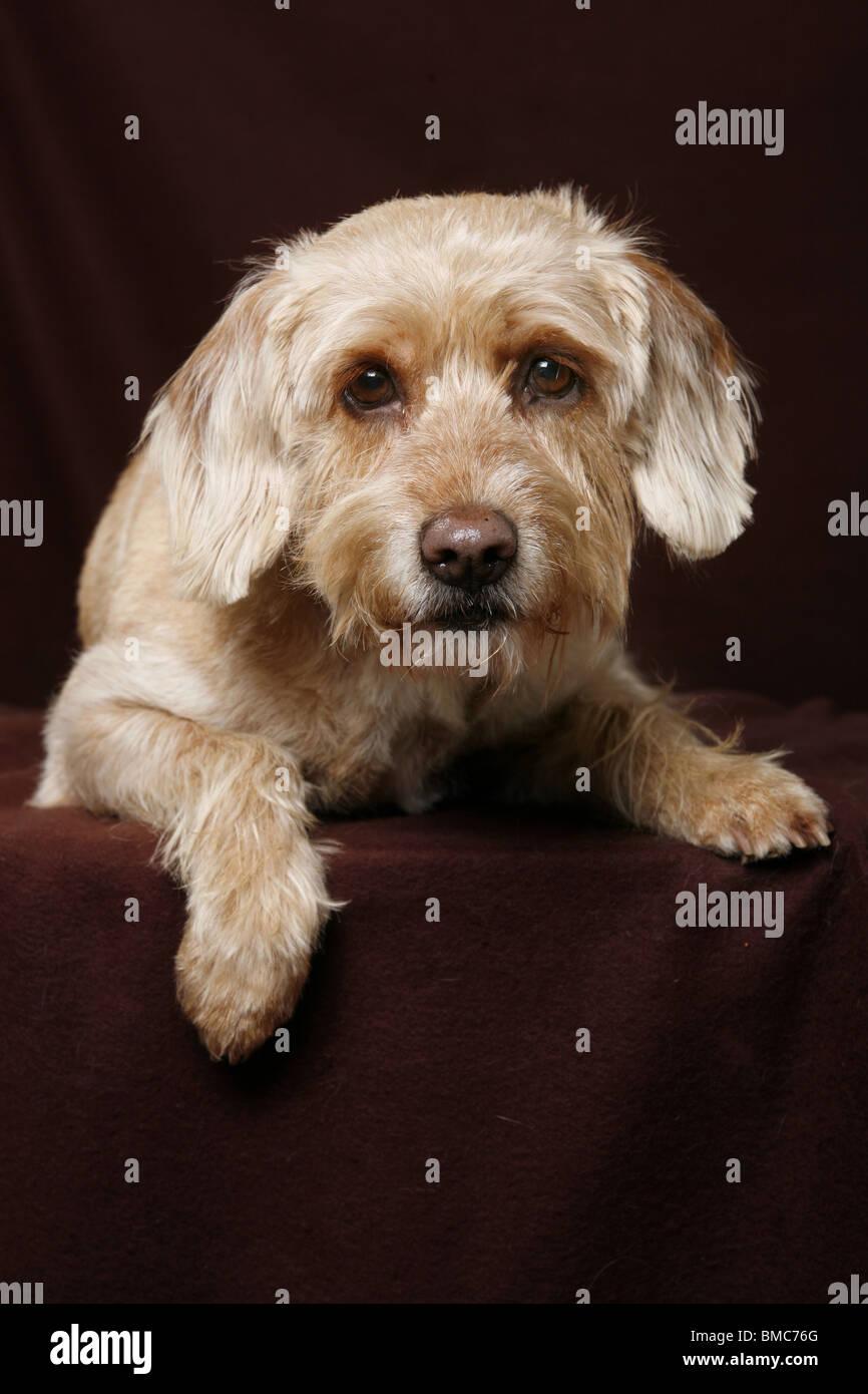 liegender hund  lying dog stock photo 29772584  alamy