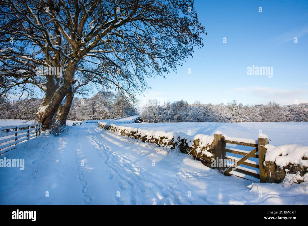 Snow scene, Northumberland, UK