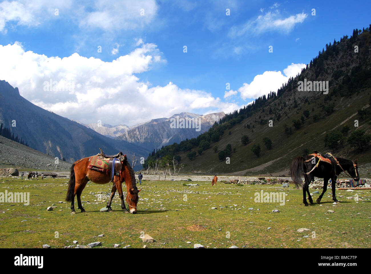 HIMALAYAN VALLY - Stock Image