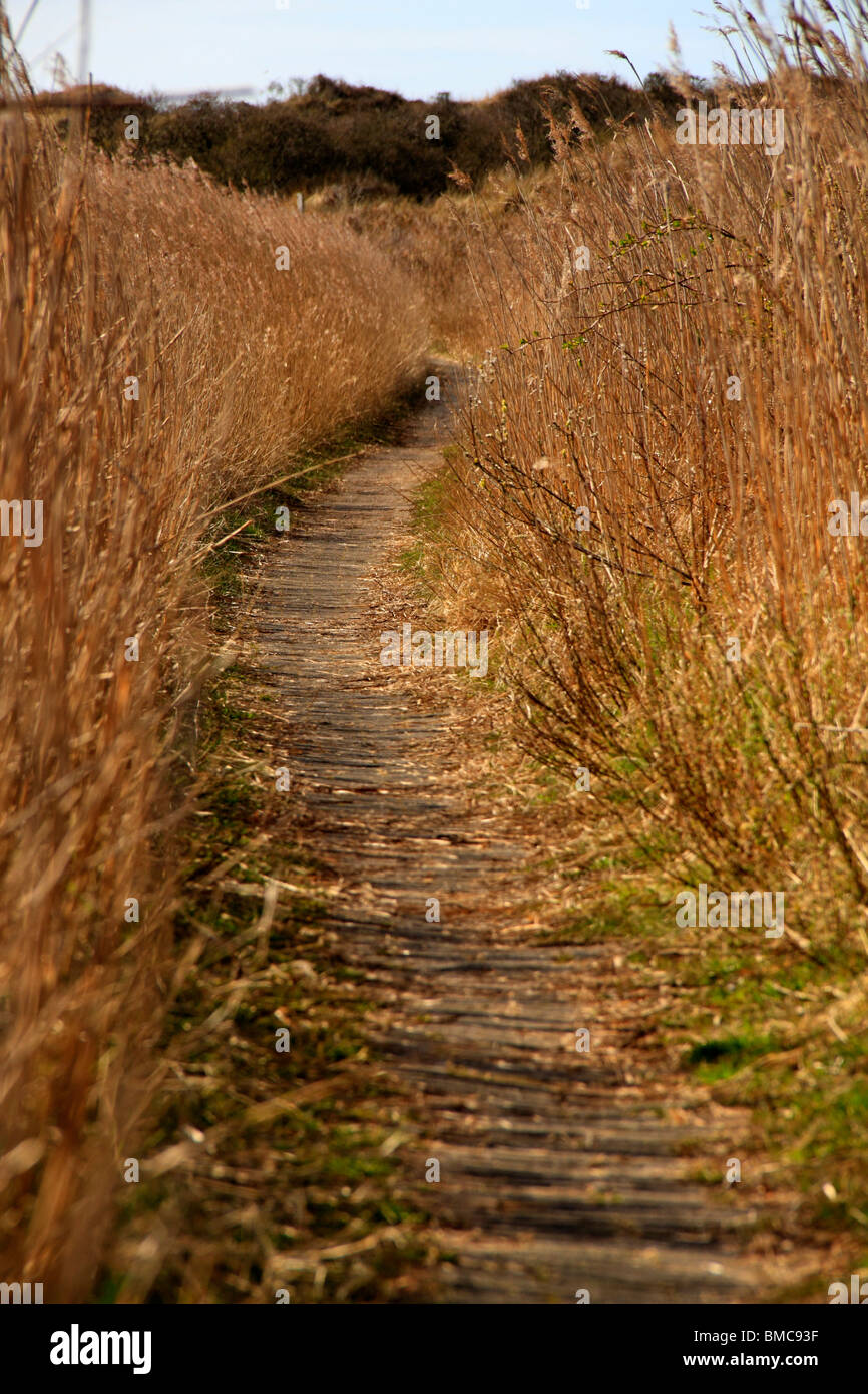 Nature Footpath through long Grass, Juist Germany Stock Photo