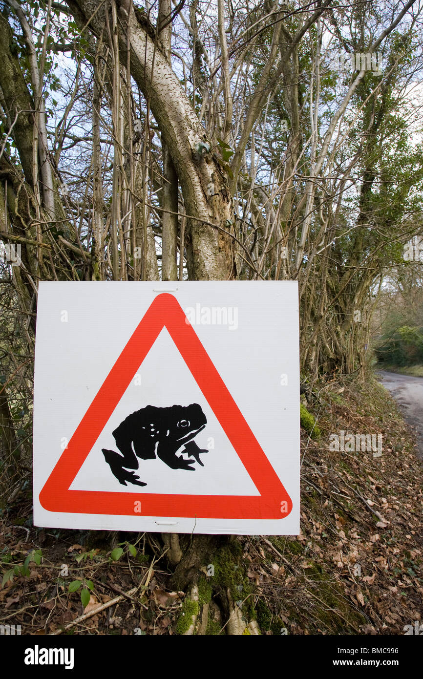 A triangular road sign warning of toads crossing, Surrey, England. - Stock Image