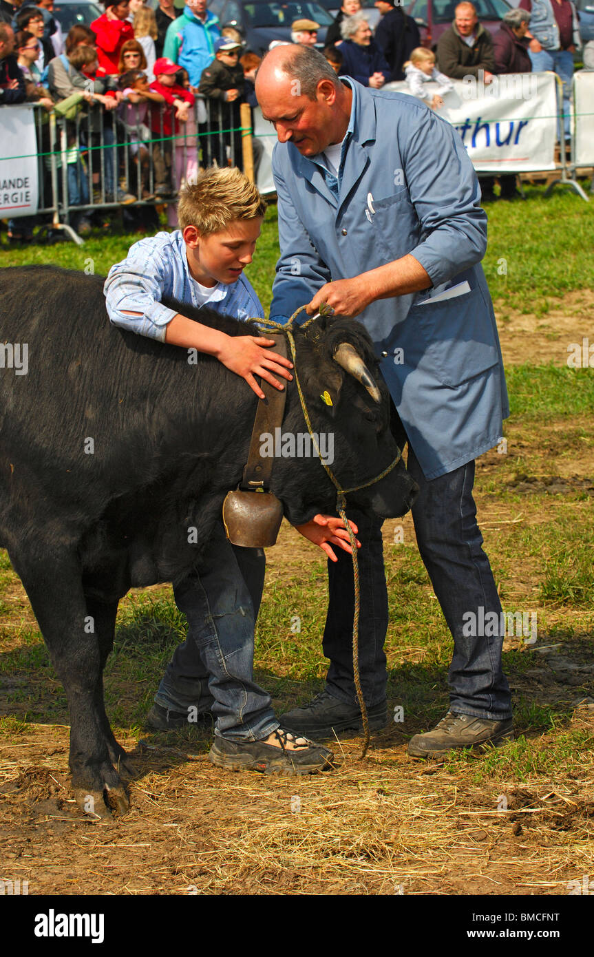 Swiss cow fight, man and boy holding a Herens fighting cow in the arena, Bussy-Chardonnay, Canton of Vaud, Switzerland - Stock Image