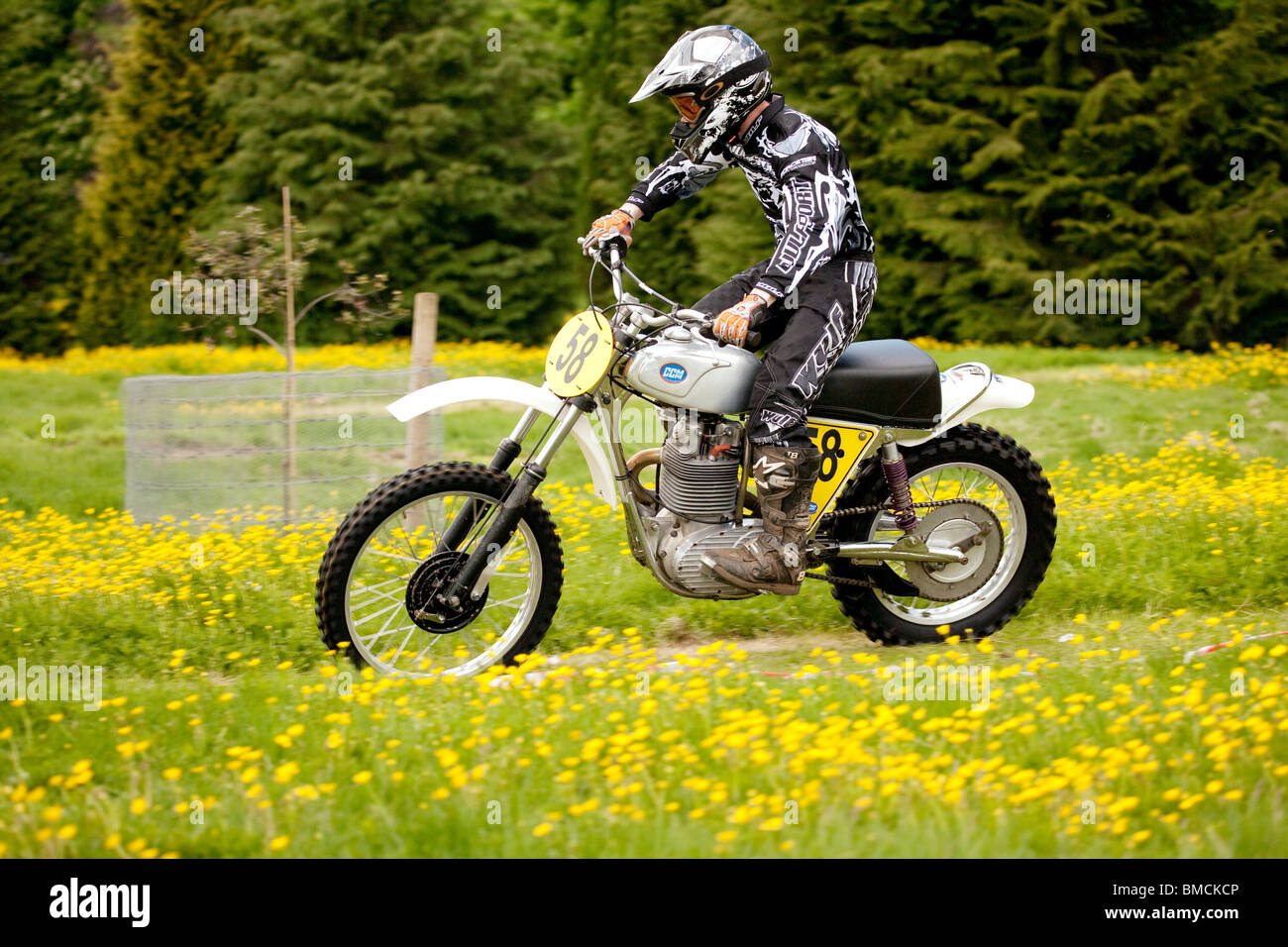 Classic motocross demo at the Barony College open day motorcycle racing through field of spring buttercups near - Stock Image