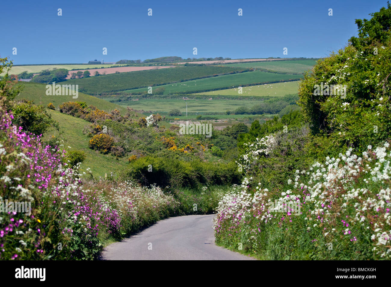 Country Lane bordered by spring flowers in Pembrokeshire, Wales - Stock Image