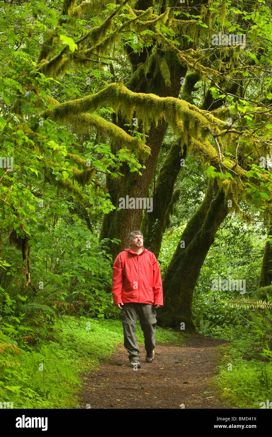 Man walking in Temperate Rainforest, Mellicoma River, Coos County, Oregon, MAY - Stock Image