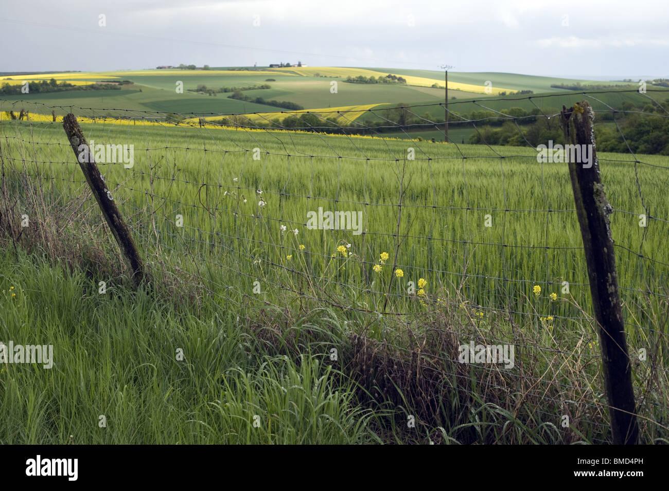 paysage de campagne, barriere, verdure nuages - Stock Image