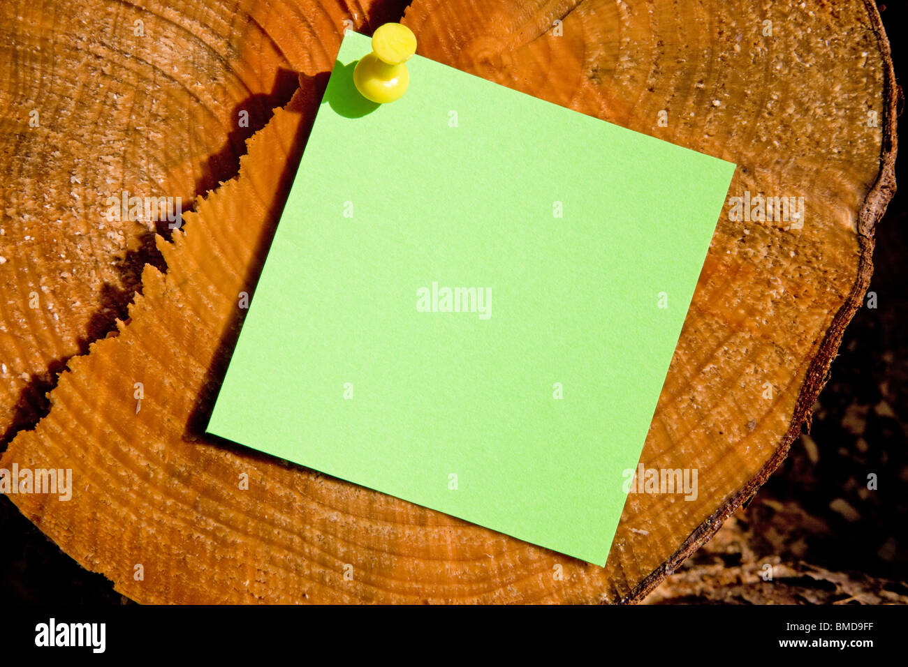 A post-it note on a tree trunk with leaf shadows - Stock Image