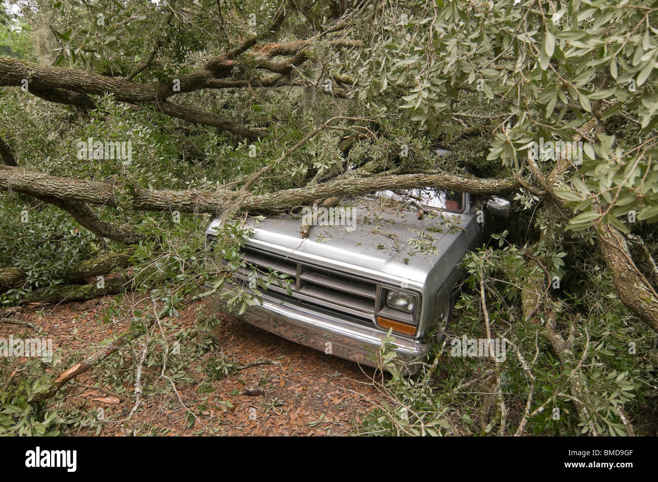 giant live oak tree splits in half and falls on house and auto, Alachua Florida Stock Photo