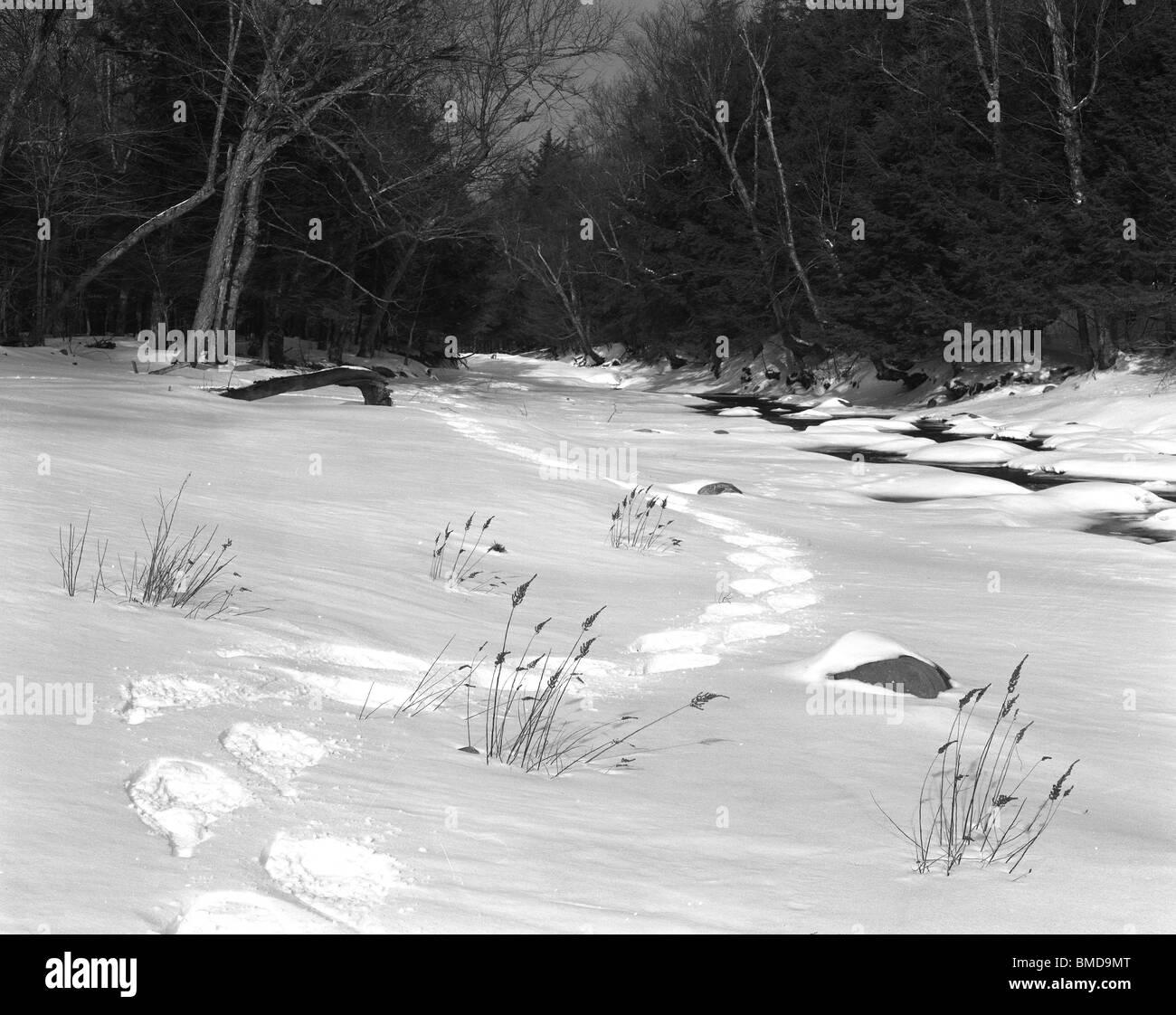 Snow Shoe Tracks along west Branch of Neversink River, NY - Stock Image