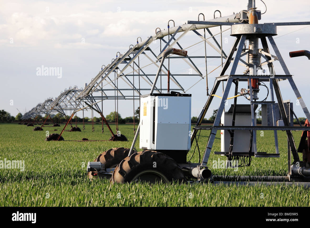 irrigation sprayer in a cornfield in May - Stock Image