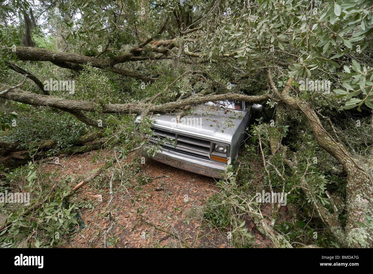 giant live oak tree splits in half and falls on house and auto Alachua Florida Stock Photo