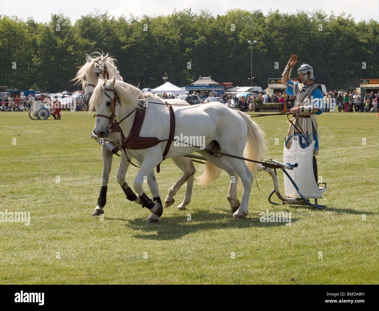 Stunt rider with two white horses in a demonstration of Roman Chariot Racing in a country fair North Yorkshire England - Stock Image