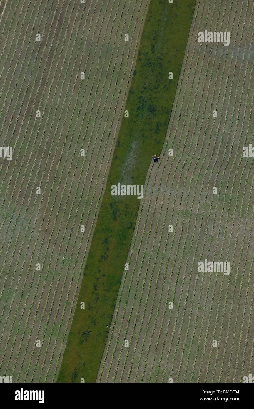 aerial view above hay harvest Central Valley California - Stock Image
