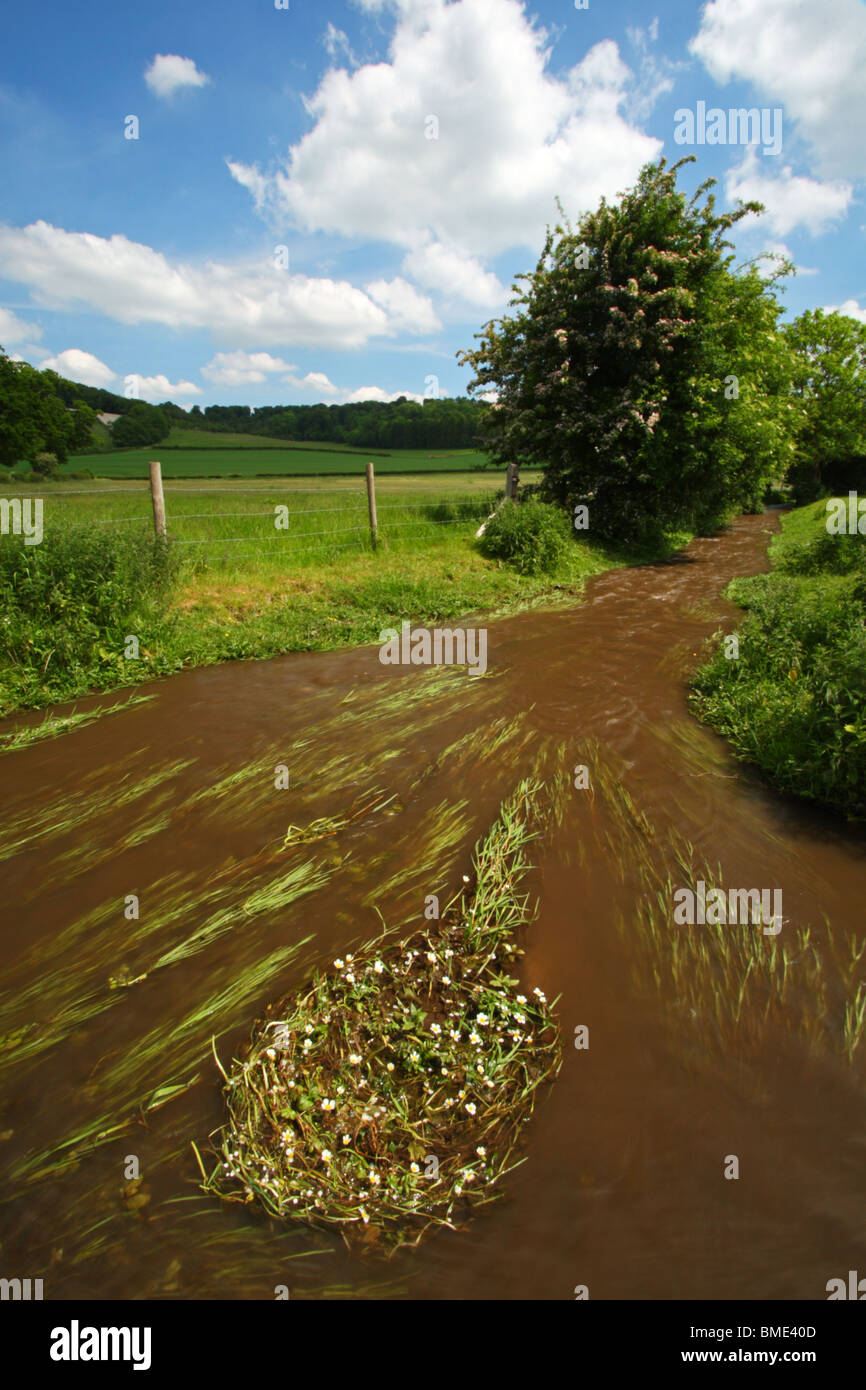Hambleden Brook, a chalk stream flowing from Hambleden in the Chilterns to Mill End, Buckinghamshire, United Kingdom. - Stock Image