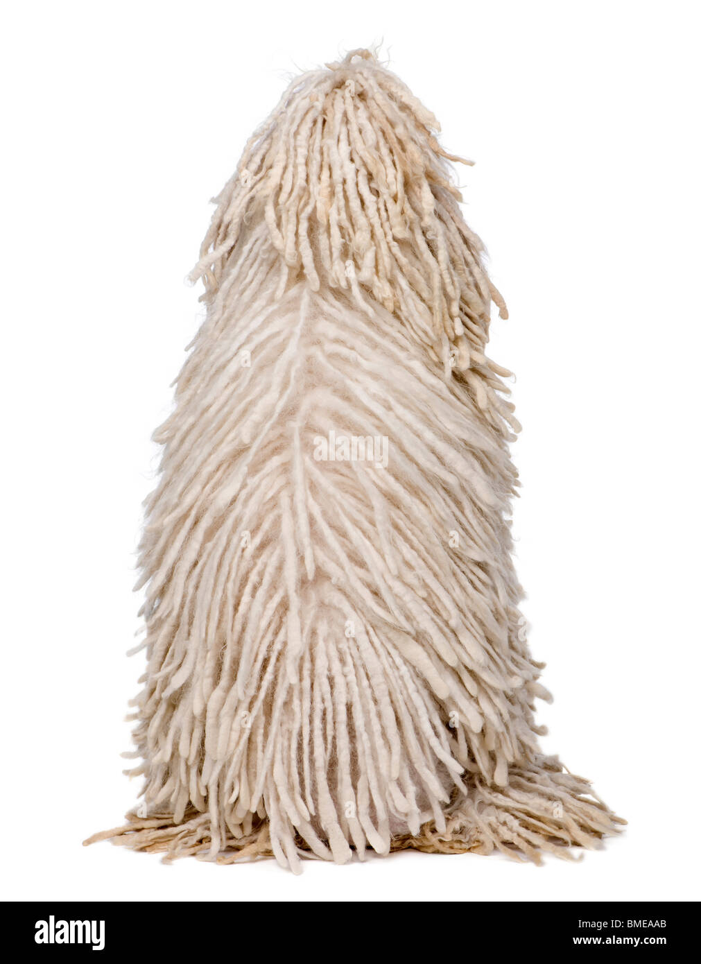 Rear view of White Corded Standard Poodle sitting in front of white background - Stock Image