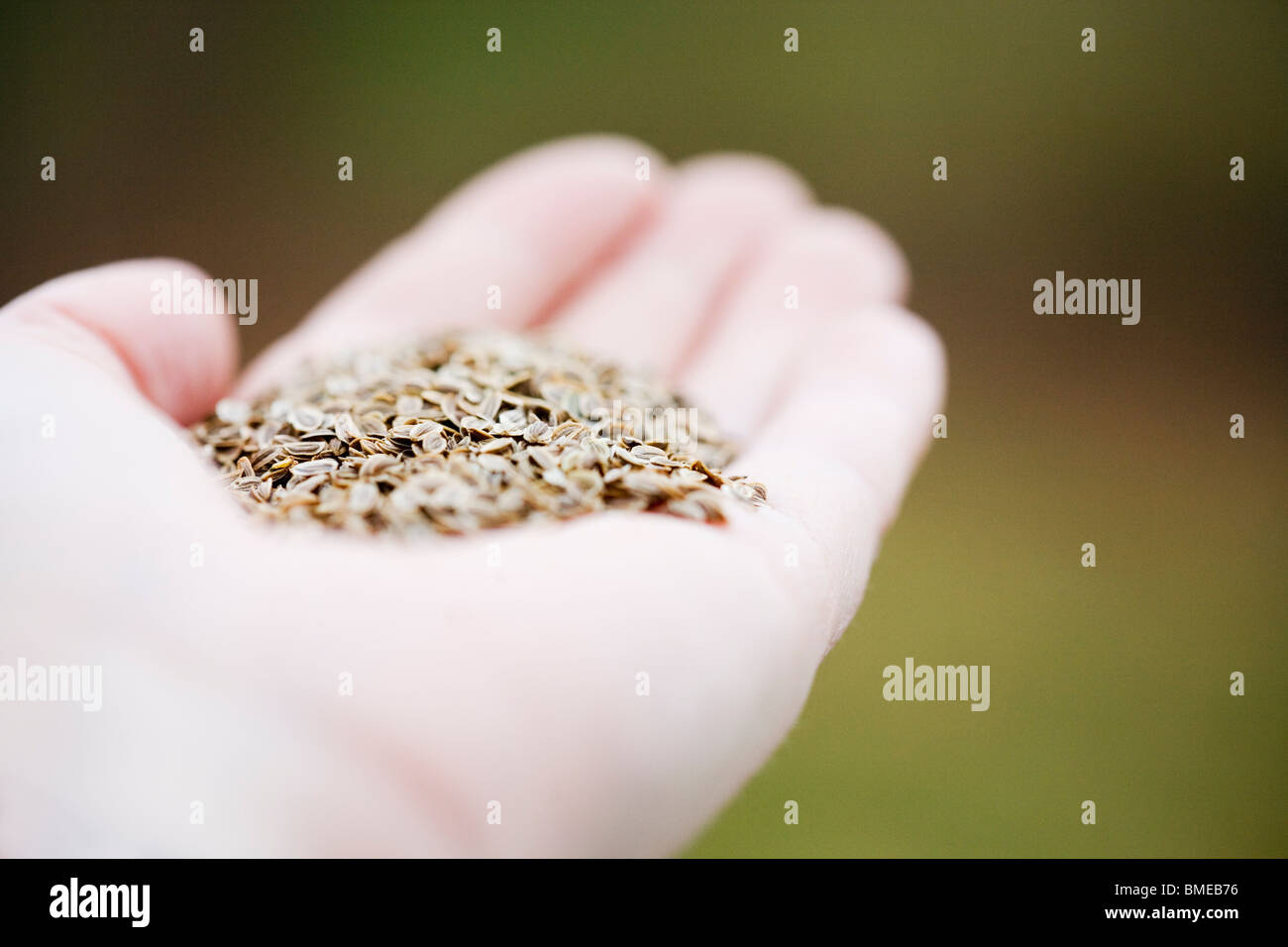 Seeds in a hand, Sweden. - Stock Image