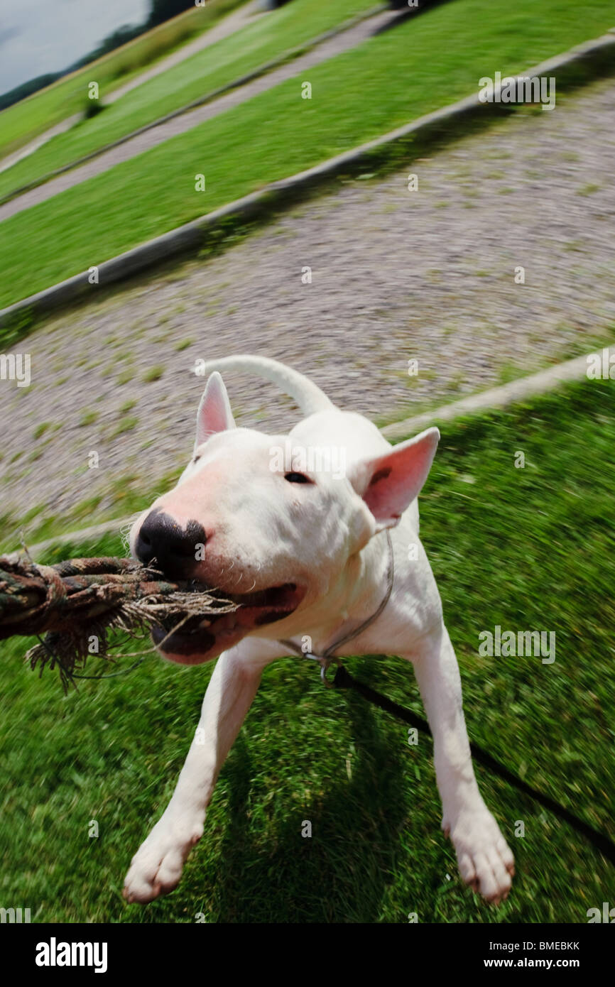 Dog messing about - Stock Image