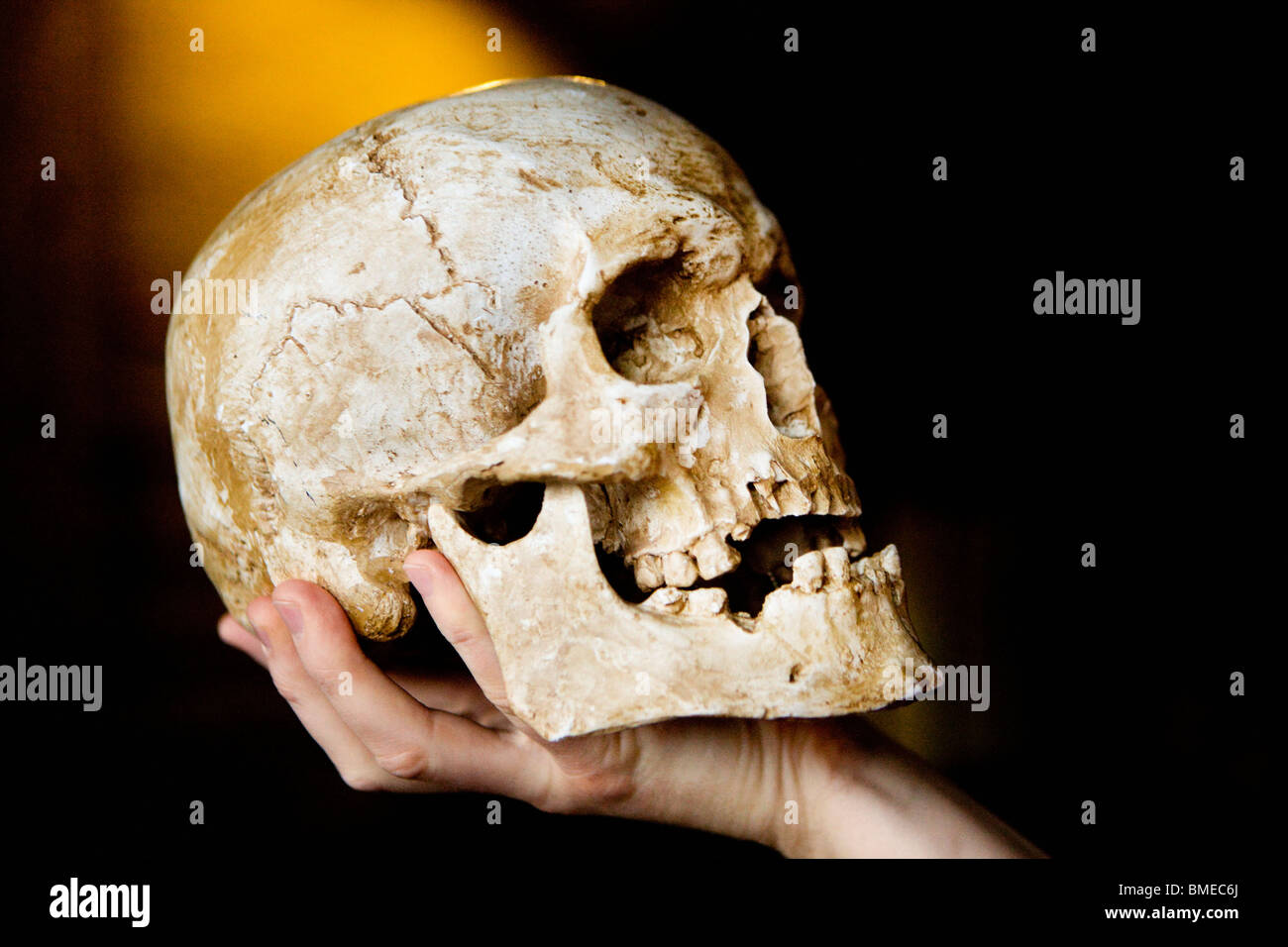 Person holding human skull - Stock Image