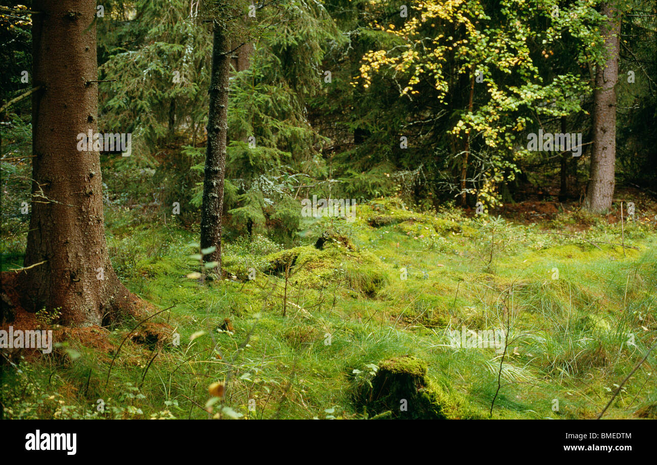 Trees and grass growing in forest - Stock Image