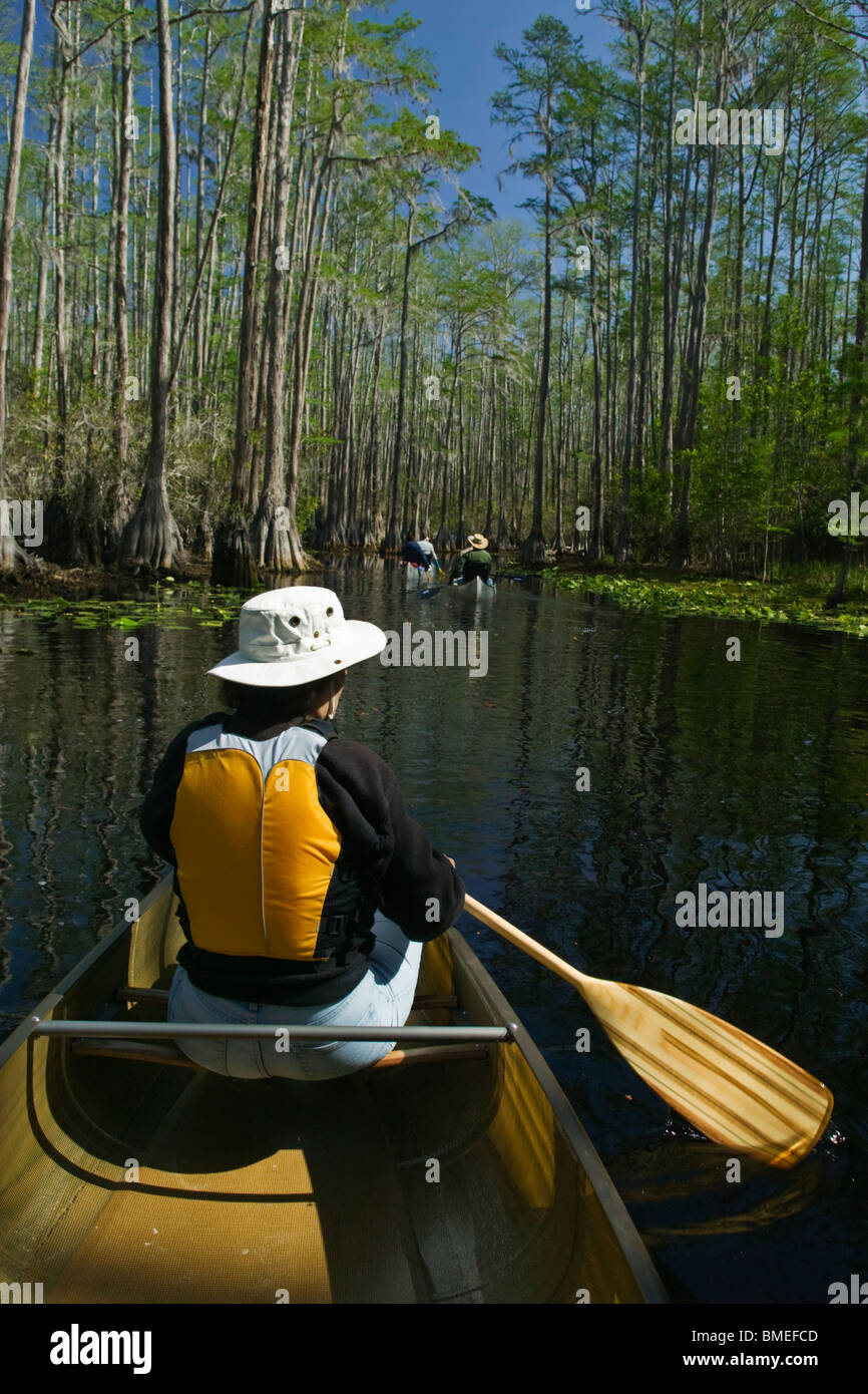 North America, USA, View of person rowing boat on swamp - Stock Image