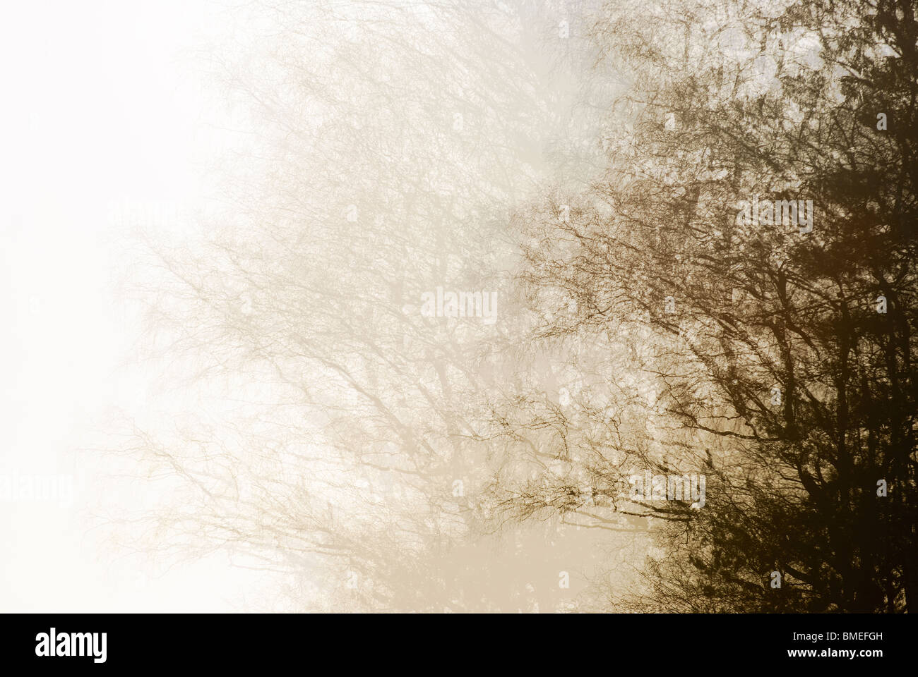 View of tree in fog - Stock Image