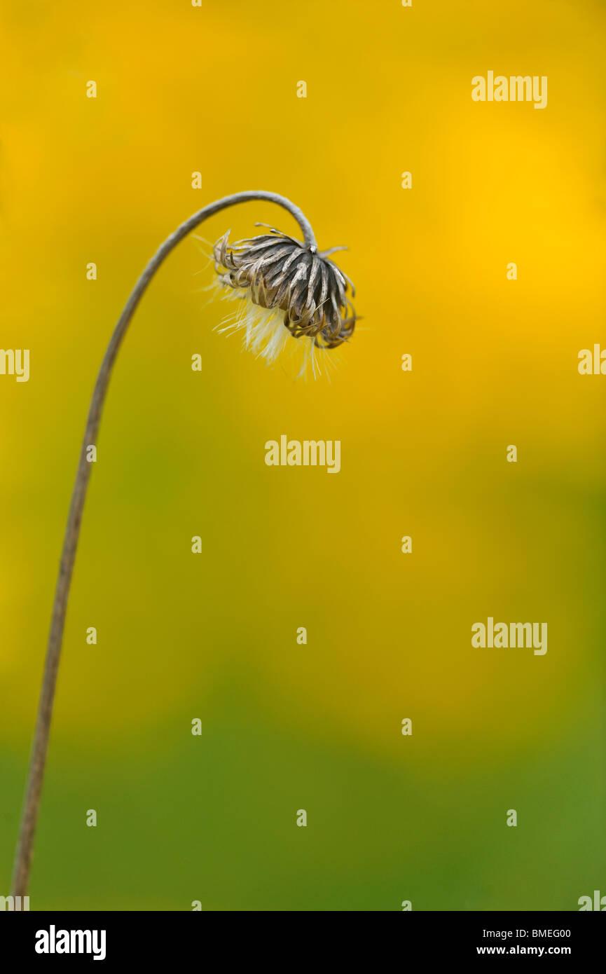 Scandinavia, Sweden, Vastergotland, View of flower in garden, close-up Stock Photo