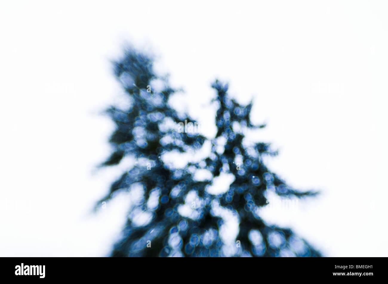 Scandinavia, Sweden, View of tree - Stock Image