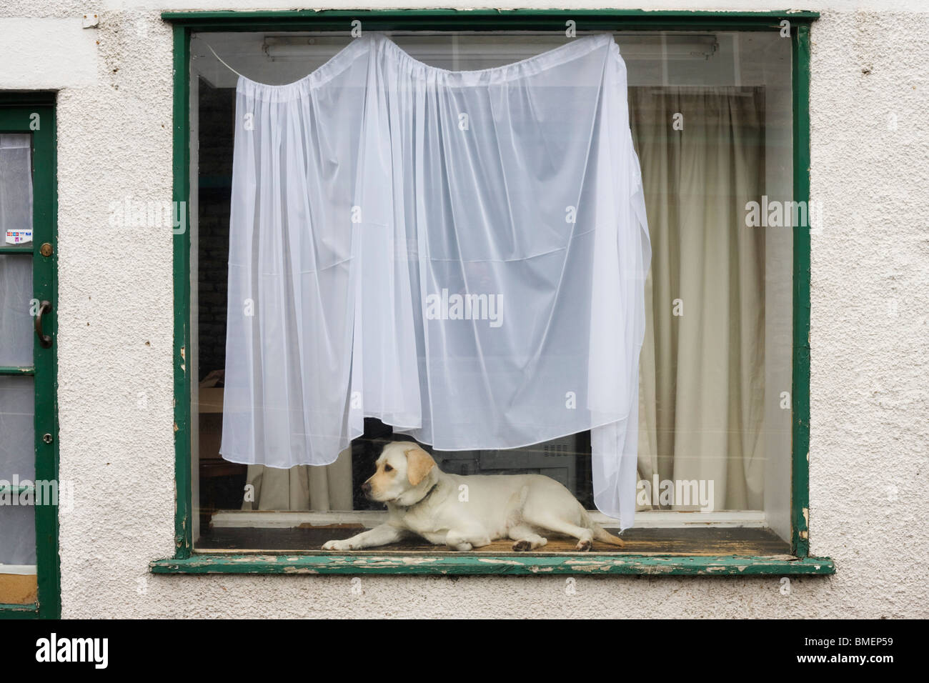 Pet dog in house window. - Stock Image