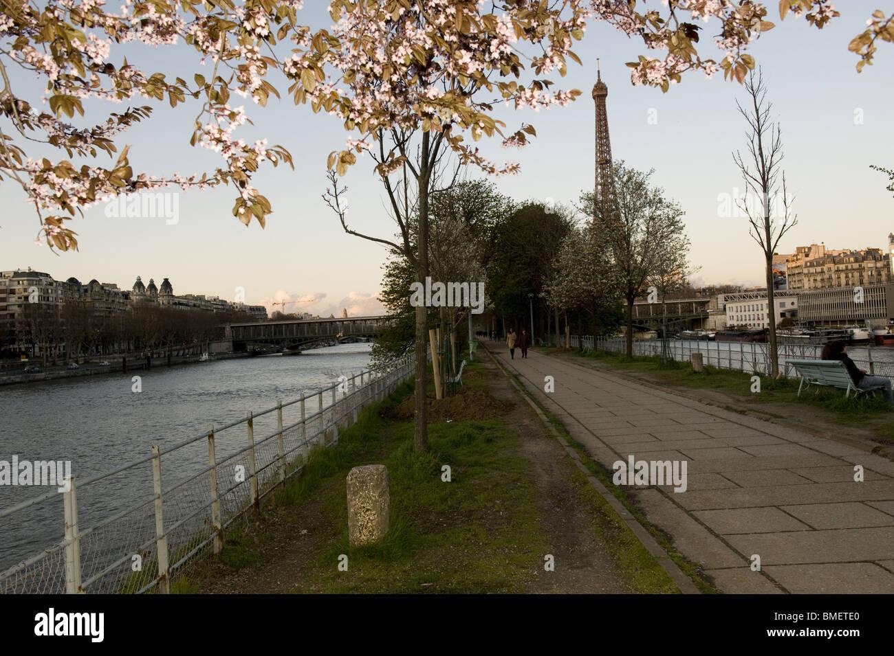 arbre, paris, seine, tour eiffel - Stock Image