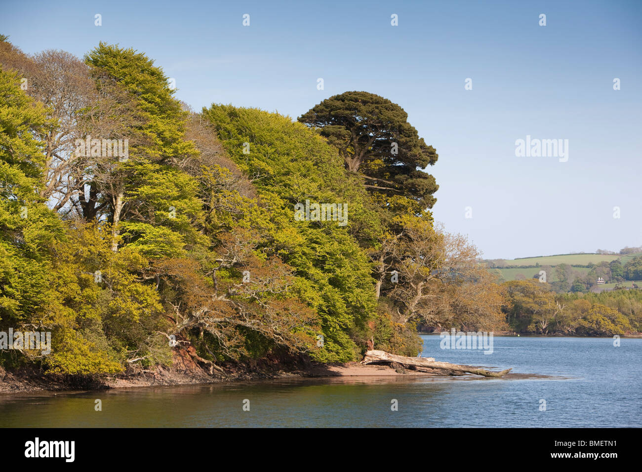 UK, England, Devon, River Dart riverbank trees in new leaf on bend in river - Stock Image