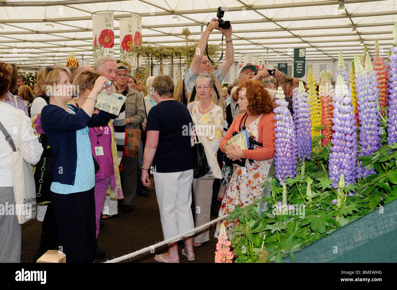 Annual Chelsea Flower Show - visitors gather around the award winning Lupin grower, Westcountry Nurseries. 2010. Stock Photo