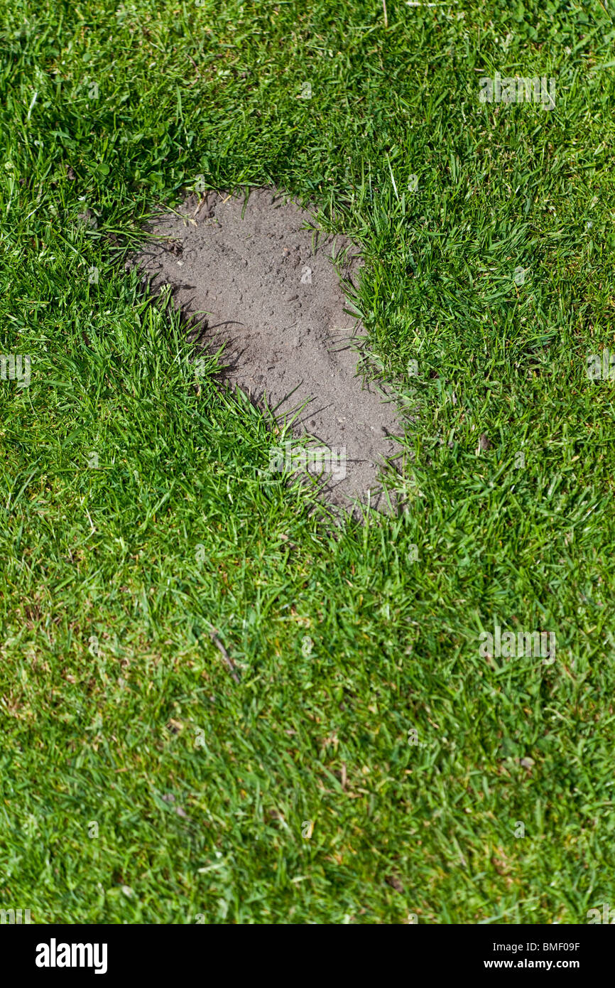 Grass and footprint, concept of environmental damage - Stock Image