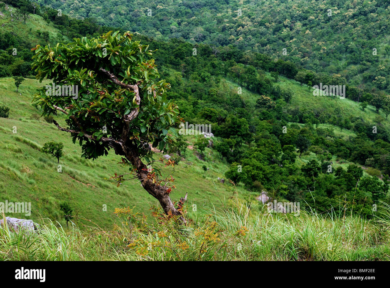india landscape hill valley - Stock Image
