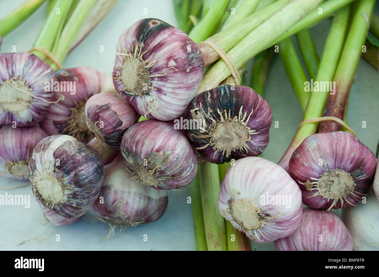 Garlic on sales at a farmer's market stall, Issaquah,Washinrton. - Stock Image