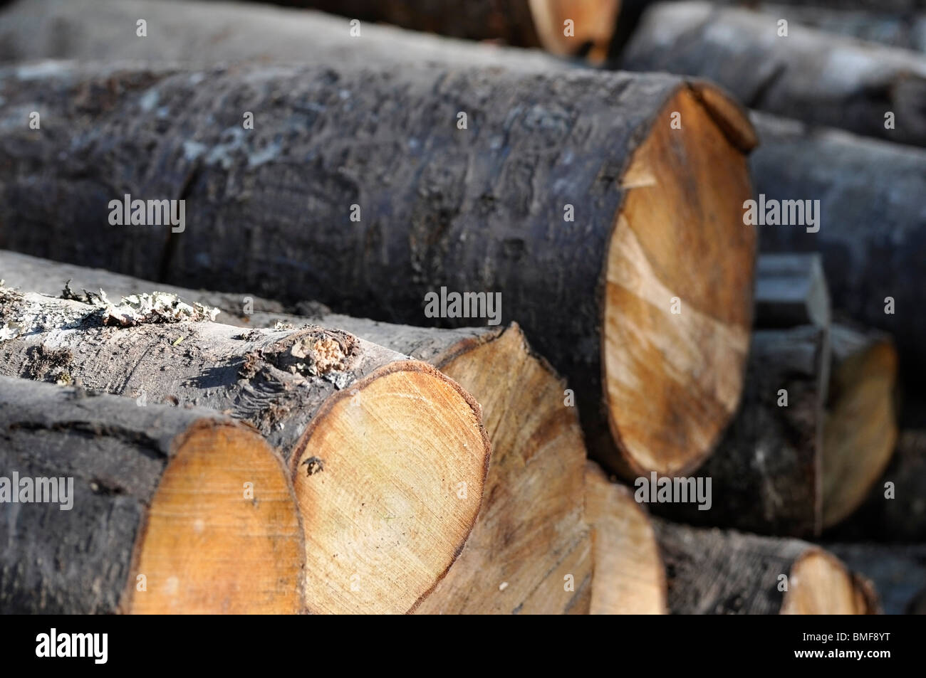 Logs of Wood - Stock Image