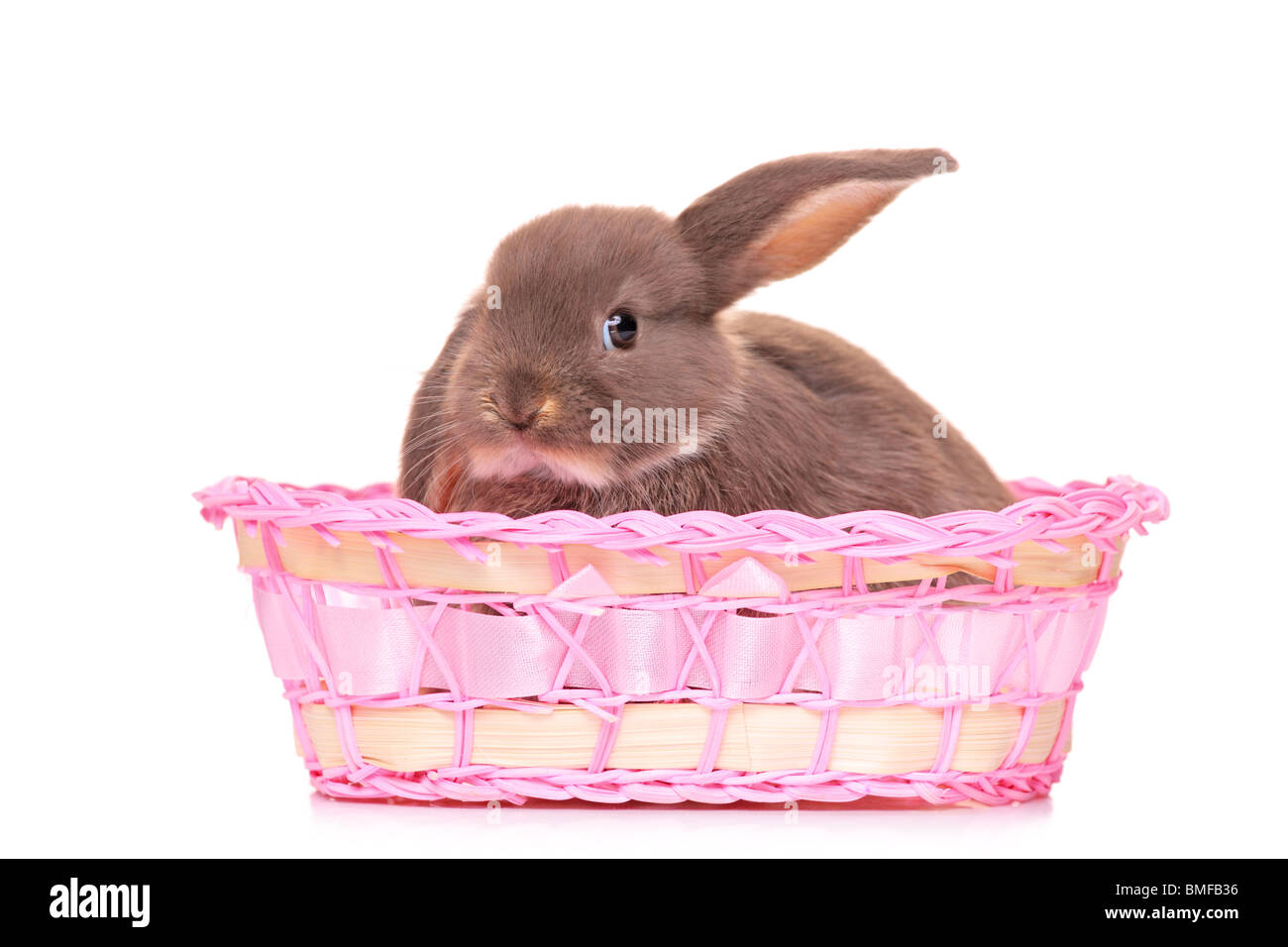 A small rabbit in a basket - Stock Image