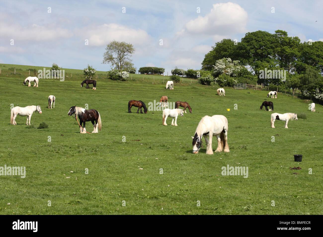 Appleby Horse Fair, Appleby-In-Westmorland, Cumbria, England, U.K. Stock Photo