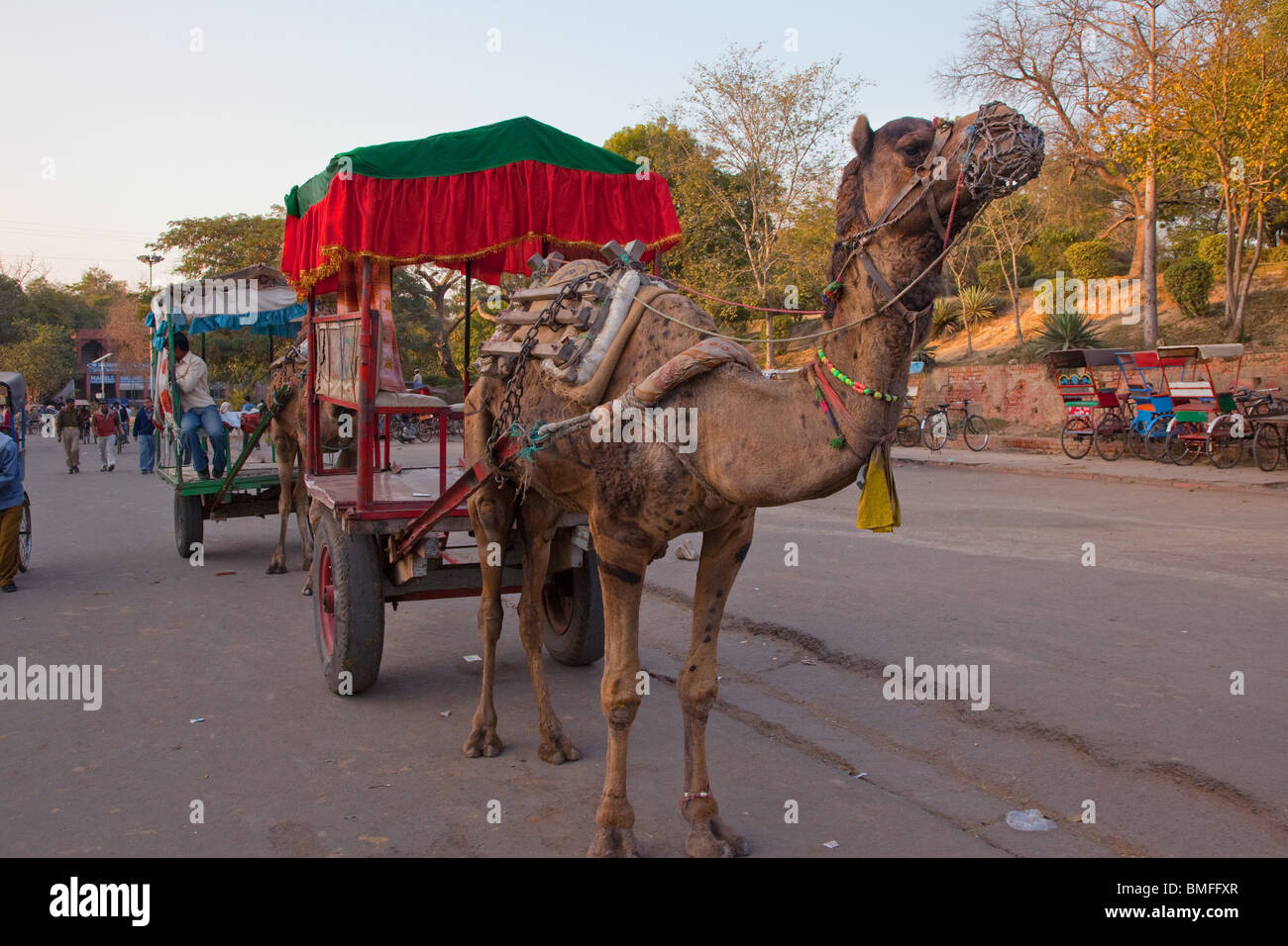 Camel Pulling a Passenger Cart, Agra, India - Stock Image