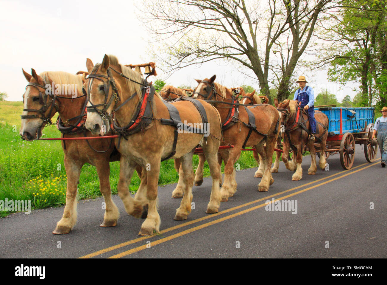 Charlie Lindsay drives six horse bell team, Greencastle, Pennsylvania - Stock Image