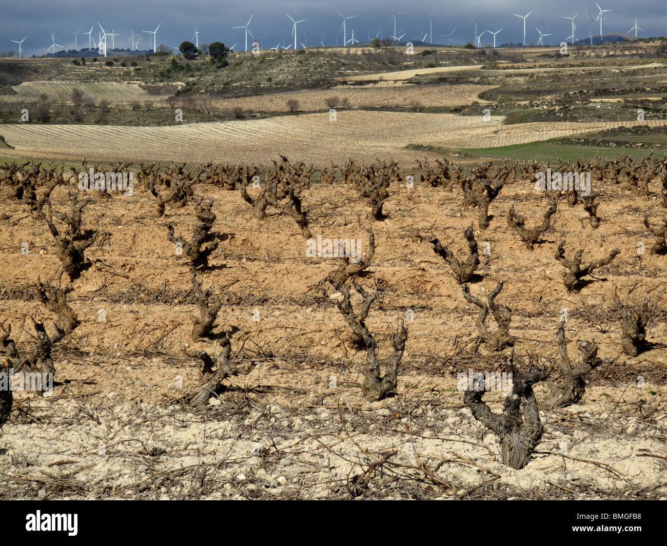 Viñedos en Navarra. España. CAMINO DE SANTIAGO. Vineyards in Navarre. Spain. WAY OF ST JAMES. Stock Photo