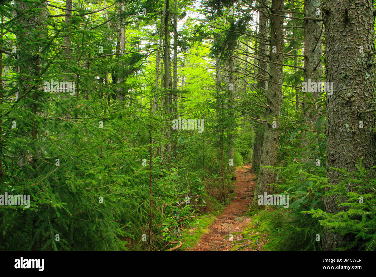 Rohrbaugh Trail, Dolly Sods Wilderness Area, Hopeville, West Virginia - Stock Image