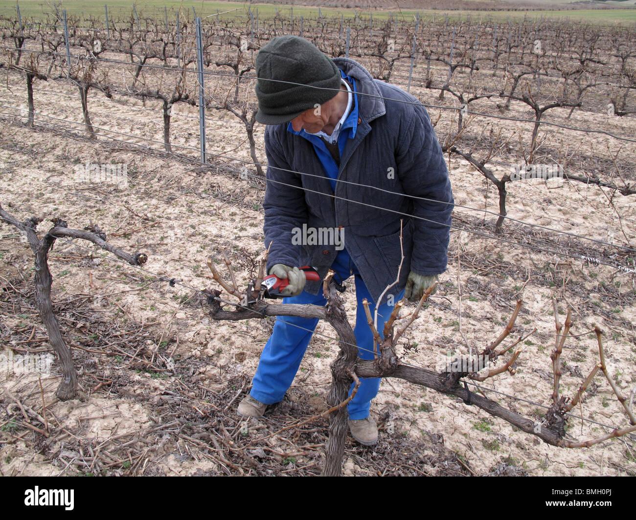 Vineyards in Navarre. Spain. WAY OF ST JAMES. - Stock Image