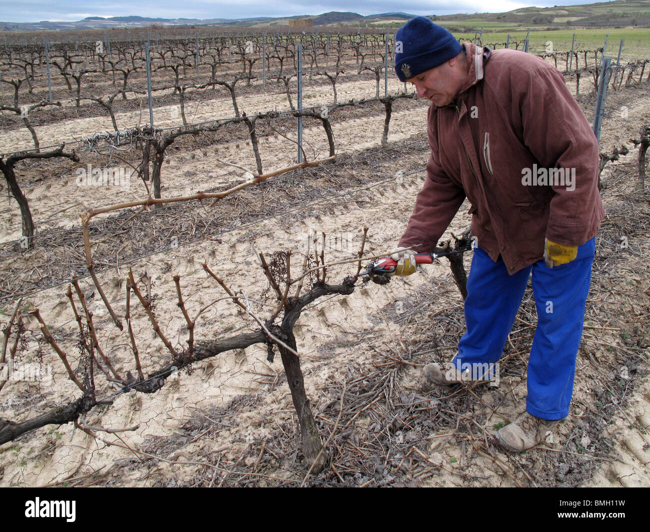 Vineyards in Navarre. Spain. WAY OF ST JAMES. vineyard winter dry wintertime - Stock Image