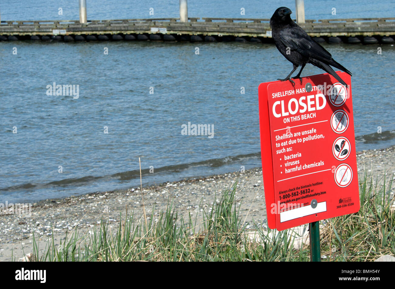 Raven sits atop beach seafood warning sign - Stock Image