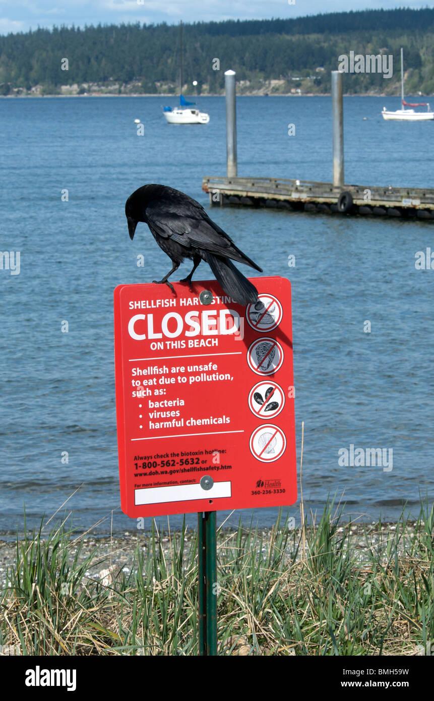 Black bird sits atop beach shellfish warning sign - Stock Image
