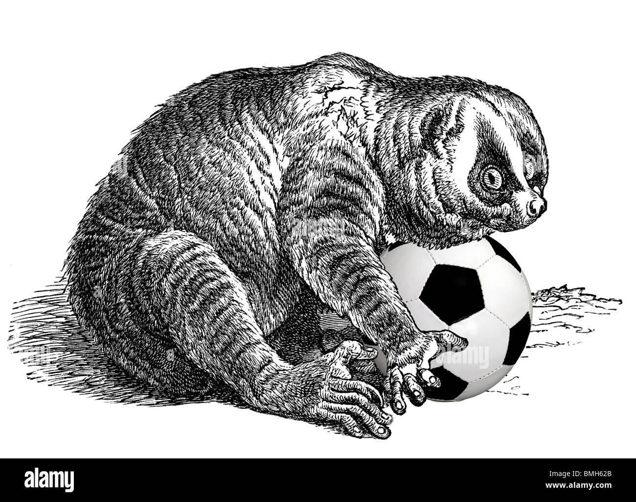 My football - Stock Image